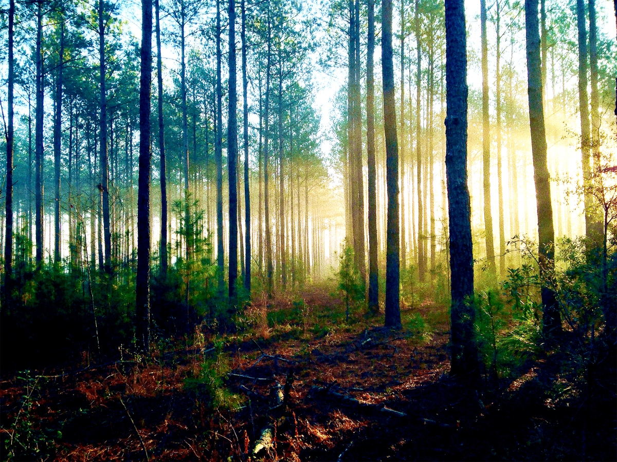 The Forest for the Trees: A Way through the Mess of Being a Fiction Writer
