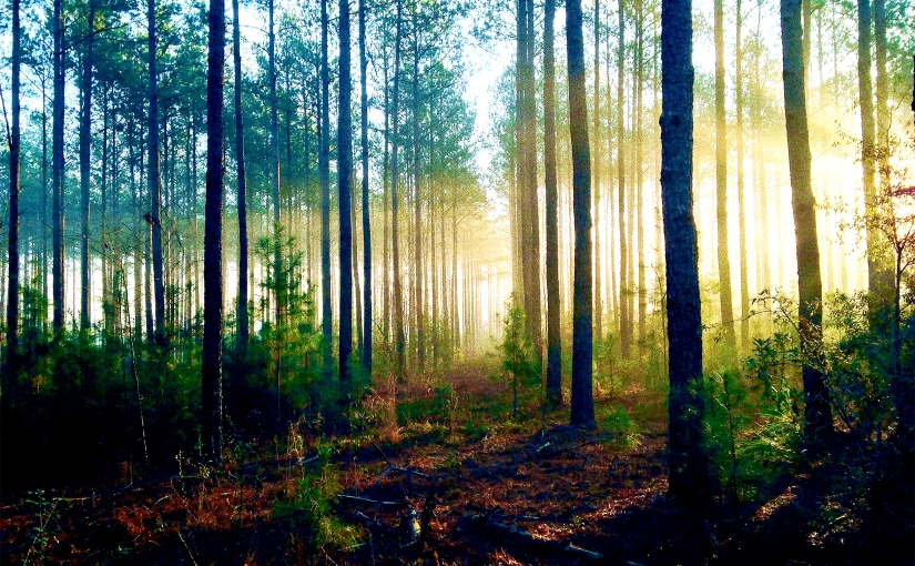 The Forest for the Trees: The Way to Be a Fiction Writer